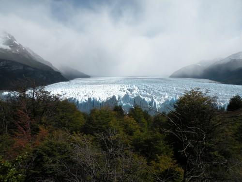 A-Le perito Moreno et foret.JPG